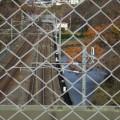 師走の真美沢公園のスナップです