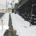 仙台も雪です