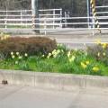 花咲きほこり