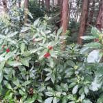 森林公園HD