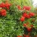 もうすぐ冬、たくさんの赤い実が…
